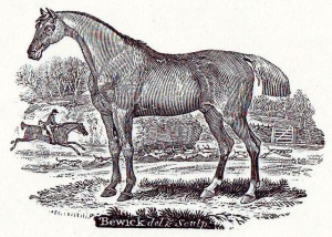Bewick horse 1790