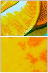 Naranjada micro twice