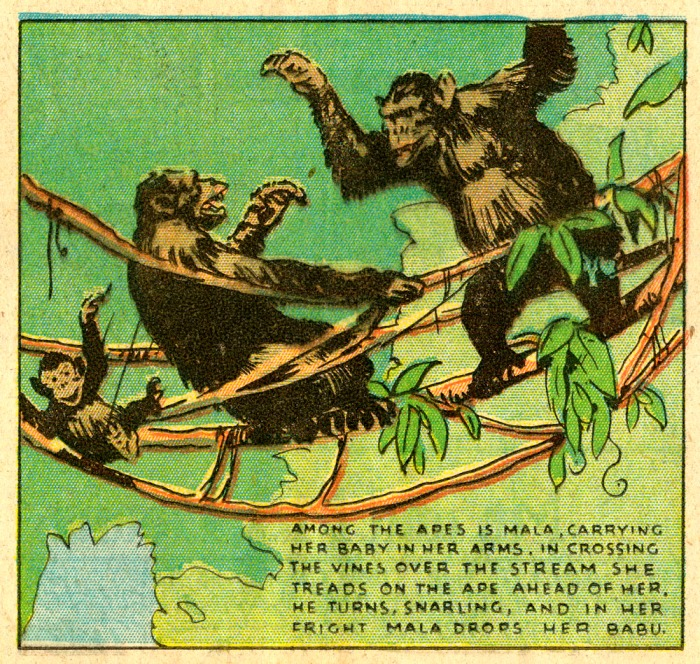 Tarzan_Foster_Jan 24 1932_Panel 2